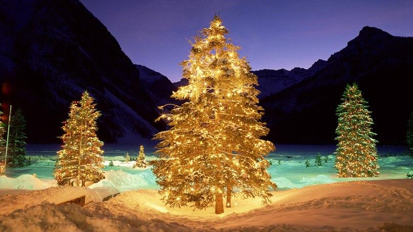 Срубить новогоднюю елку